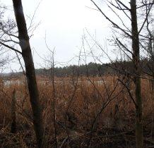 jezioro ukryte za trzcinami