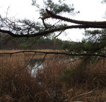 po zejściu z widocznej drogi szlak prowadzi brzegiem jeziora