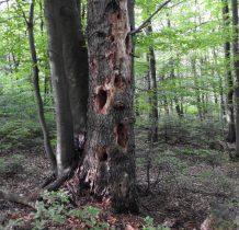 beskid-niski-dawnych-wsi-lemkowskich-2020-06-06_07-51-03