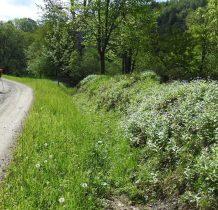 idziemy droga w kierunku Radocyny terenami dawnej wioski