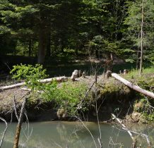 cały teren Radocyny znajduje się w obszarze Natury 2000