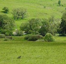 beskid-niski-dawnych-wsi-lemkowskich-2020-06-06_10-44-03