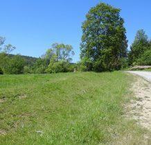 droga w kierunku Jasionki(Krzywej)