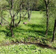 beskid-niski-dawnych-wsi-lemkowskich-2020-06-06_14-01-04
