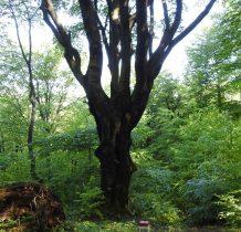 wspaniały ,bukowy las nam towarzyszy