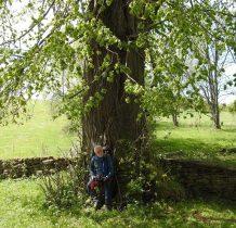 cerkiew otoczona pomnikowymi drzewami