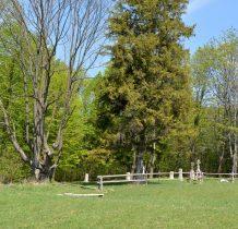 Przy cmentarzu wiekowe drzewa