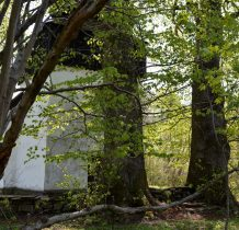 Stary kamienny mur i lipy na straży