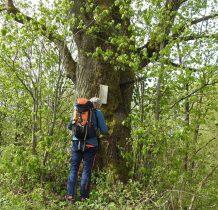 na potężnym drzewie-drewniana tabliczka