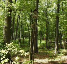 w pięknym bukowym lesie oznaczeń brak