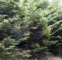 na drzewach zaciekawiły nas nowe pnacza