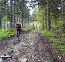 dalej leśna droga u podnóża Gołogrzbietu