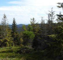 punkt widokowy pod szczytem Jawornika Kobylicznego