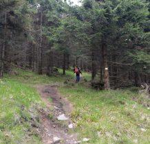 spotykamy ponownie żółty szlak,którym podchodzimy na Czernicę