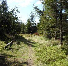 ścieżka wije się w lesie -wychodzimy pod szczyt
