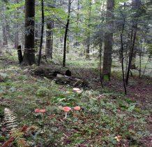 piękne lasy,piękne grzyby -prawdziwki też widzimy