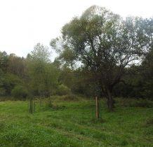 drzewo owocowe-to już tereny dawnej wsi Wilsznia