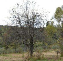 tu i ówdzie drzewa owocowe znacza obecność dawnej wsi
