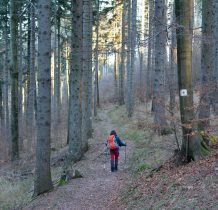 Żółty szlak prowadzi nas dalej lesnymi dróżkami