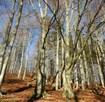 Las jak zawsze niesamowity