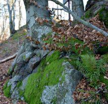 Las żyje