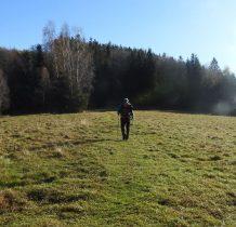Idziemy zielonym szlakiem przez Lesieniec