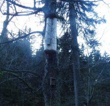 Na drzewach obserwujemy dziwne budowle, ciekawe do czego służa?