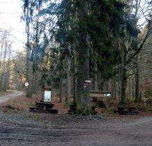 Na leśnym skrzyżowaniu