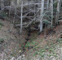 liczne wawozy przecinaja las