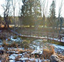 przechodzimy mostek nad potokiem i bobrowym rozlewiskiem