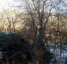 potok wpada do Sanu