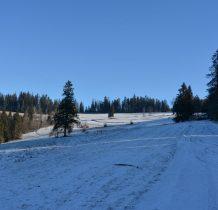 Teraz skrajem lasu w kierunku niebieskiego szlaku