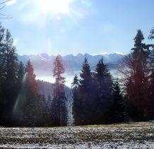 Zza drzew w blasku słońca spogladaja na nas Tatry