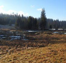 po lewej rozległe tereny bobrowe