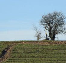 na polach wsi Biskupice