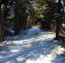 szlak prowadzi przecinka leśna