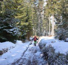 wkraczamy w las i kierujemy się na Lesicę