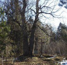 kawałek dalej przy drodze- jeden z najstarszych kamiennych krzyży górskich wsi Beskidu Niskiego
