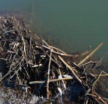 bobrowa tama przy mostku