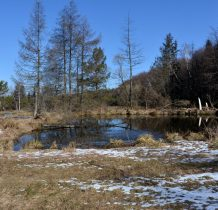 liczne żeremia bobrowe na Jasiołce poniżej mostku