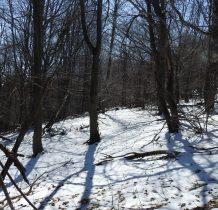 po lewej w lesie słychać jakieś dźwięki