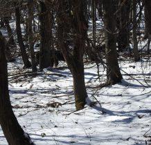 biegnie dalej przez las