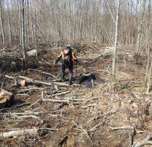 to i tak był luksus-wchodzimy na teren wyrębu lasu-zwalone gałęzie utrudniają drogę