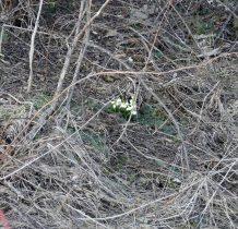 jak się okaże jutro rano-z tą wiosną jeszcze tu nie tak prędko-w nocy nasypało 20cm świeżego puchu...