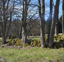 łąki oddzielone pasmami drzew z kamieniami