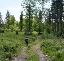 wkraczamy do lasu w okolicy szcytu Kościelnicy i dalej leśną drogą idziemy w kierunku Trzcińskiej Góry 738m n.p.m.
